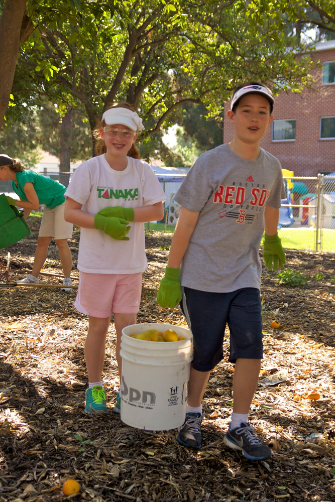 At the CSUN orange grove, we hold our largest volunteer event ever