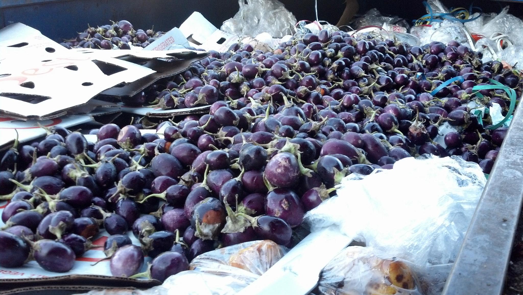 A Dumpster Full of Eggplant
