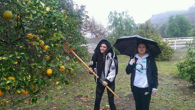 Picking Fruit in the Rain