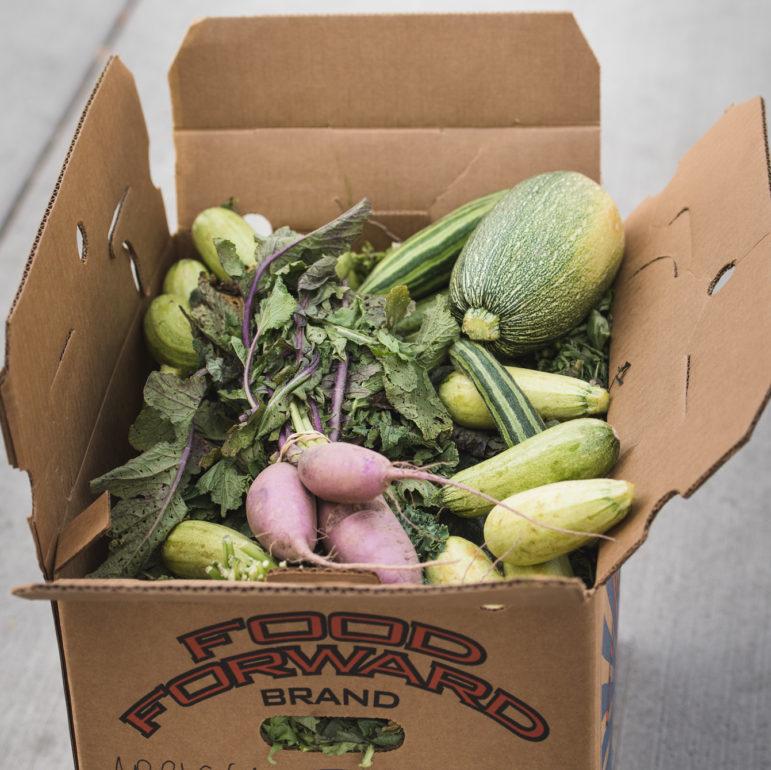 A Food Forward box full of produce donations