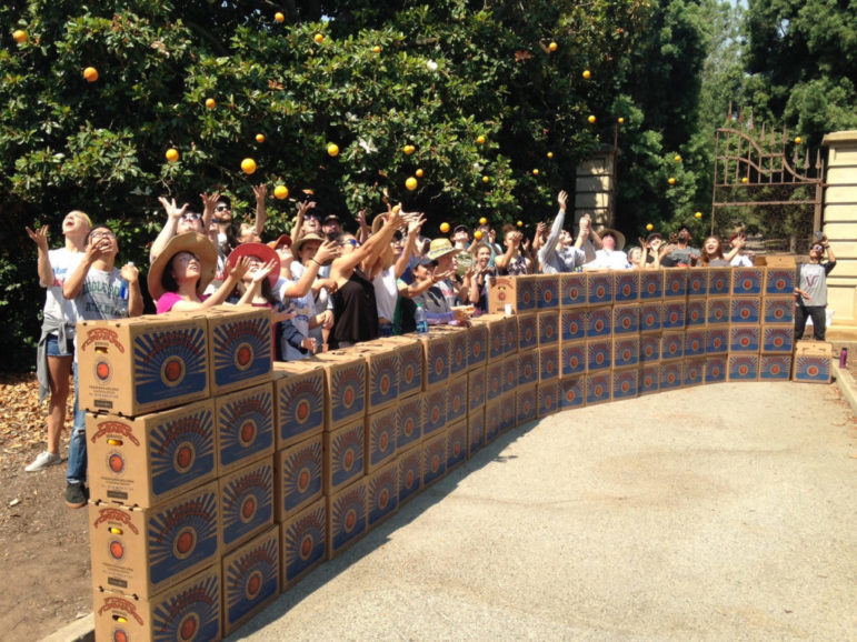 A large group of Backyard Harvest volunteers throw oranges in the air next to a long row of stacked Food Forward boxes.