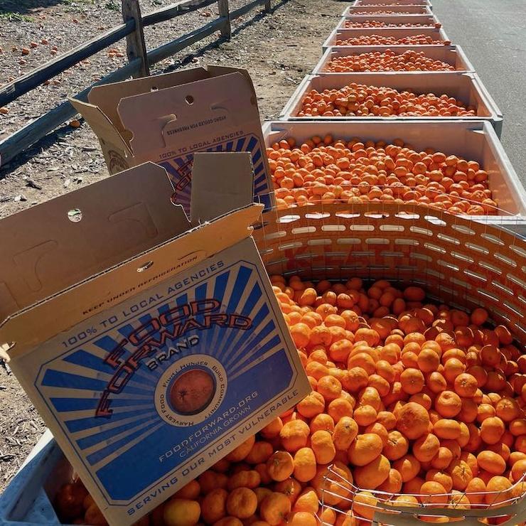 Food Forward box on top of bins of mandarins