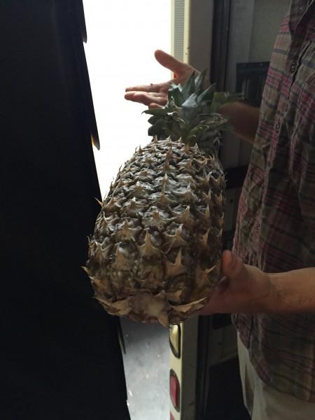 WRP-Pineapple