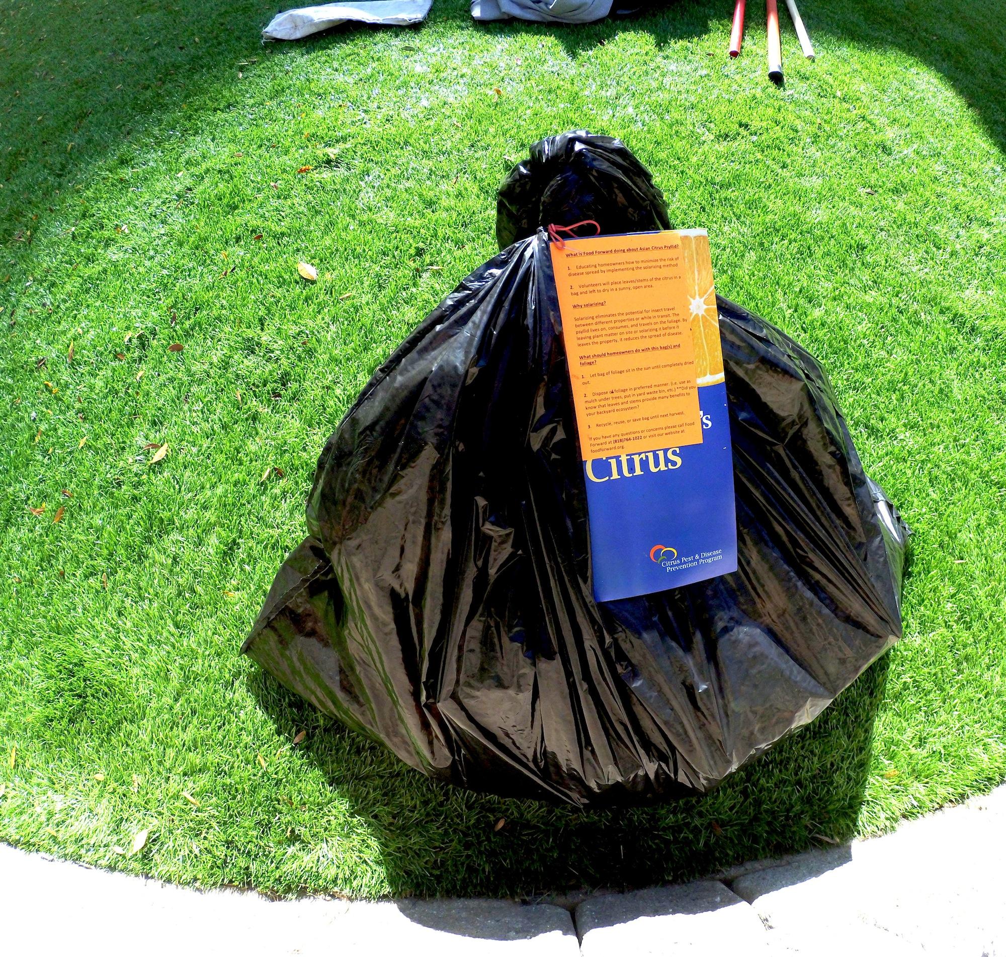 Use a trash bag to kill ACP pests