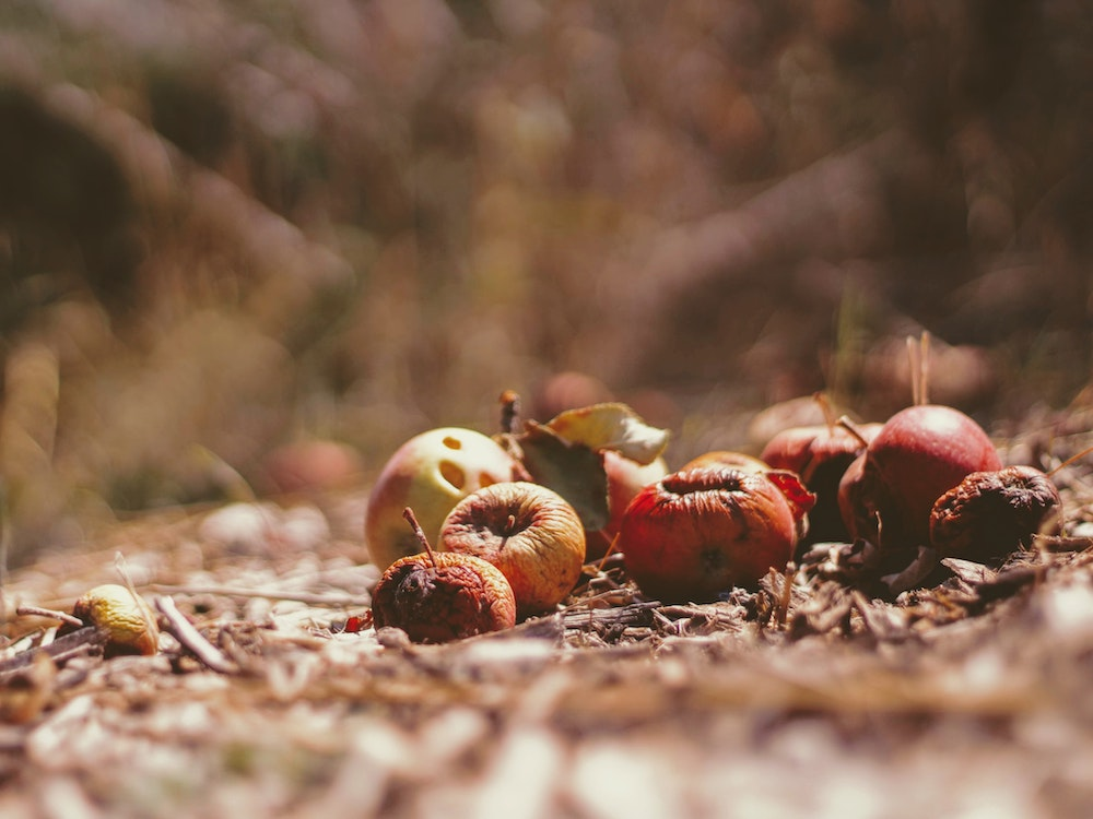 fruit going to waste on ground