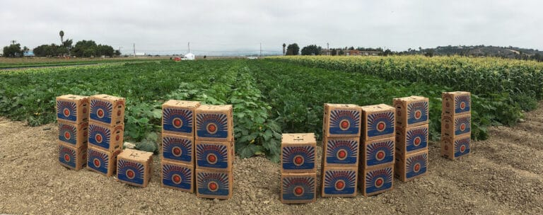 Panoramic image of farm and rows of crops and Food Forward boxes
